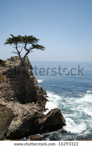 Tree on a cliff, Pacific Ocean coast, California, USA