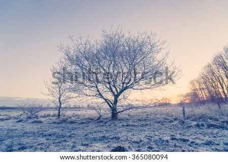 Tree on a cold morning with winter frost - stock photo