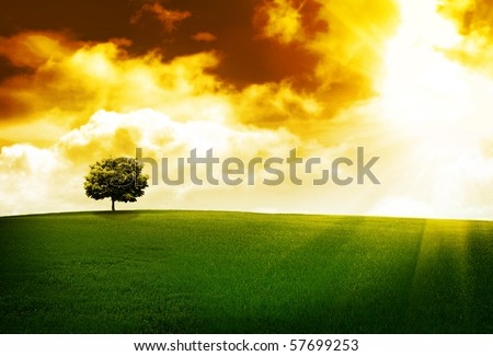 Tree on a hill at sunset - stock photo