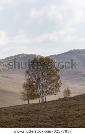 Tree on a hill with a palette of autumn colors, Inner Mongolia, China