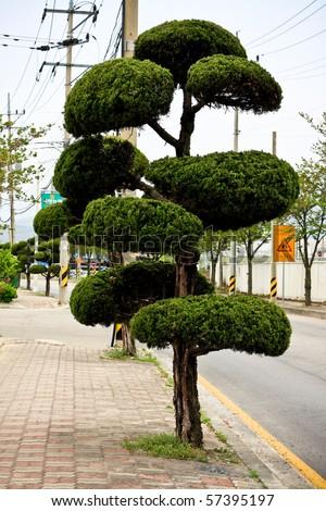 Tree on a korean street - stock photo