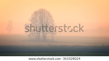 Tree on a meadow in the morning fog - stock photo