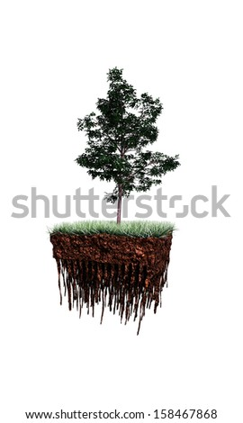 tree on a piece of soil isolated on white background - stock photo