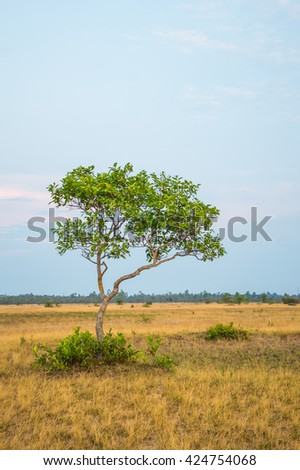 Tree on a plain