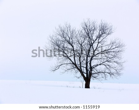 Tree on a snowy hill against a cloudy sky.