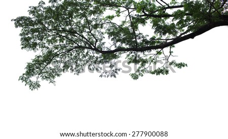 Tree on a white background - stock photo