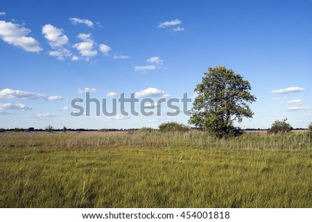 Tree on a wild meadow