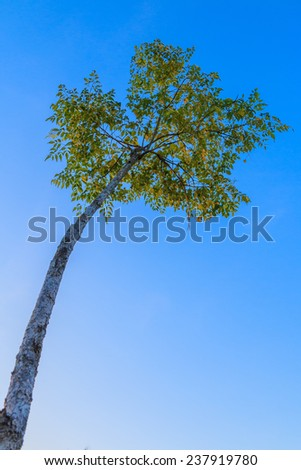 Tree on blue sky - stock photo