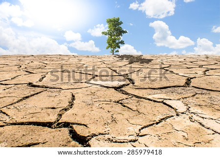 tree on cracked earth. Ecological disaster - stock photo