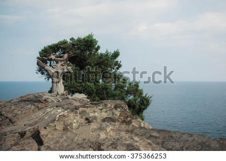 Tree on Crimea