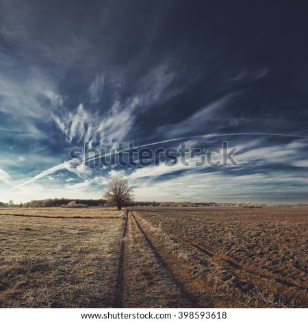 Tree on field and beautiful cirrus clouds on blue sky. Landscape.