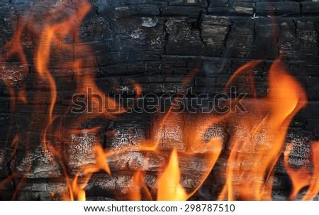 Tree on fire - stock photo