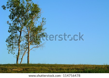 tree on grassy hill and blue sky background - stock photo