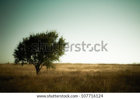 Tree on Green Land. High resolution photo. - stock photo