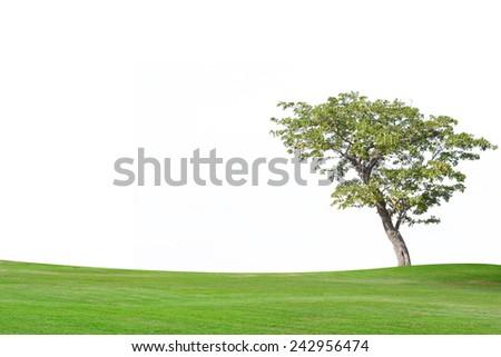Tree on isolate background - stock photo
