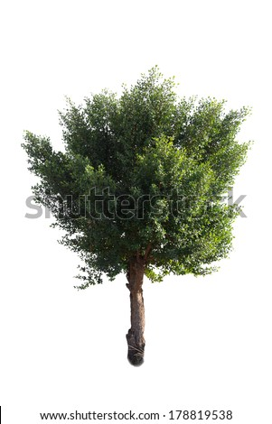 tree on isolate white background - stock photo