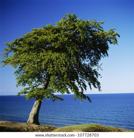 Tree on land with sea in background