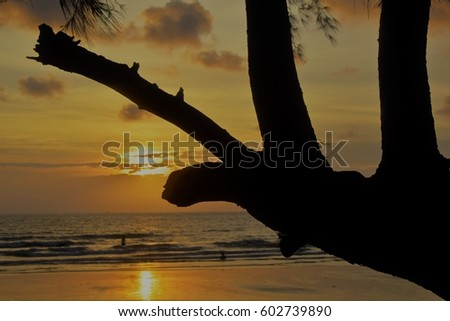 Tree on the beach and beautiful sunset in koh chang is land,silhouette landscape
