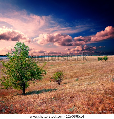 tree on the brown field at summer - stock photo
