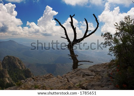 tree on the edge of a canyon - stock photo