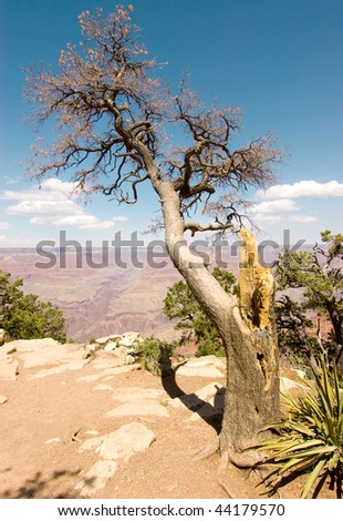 tree on the edge of the Grand Canyon - stock photo