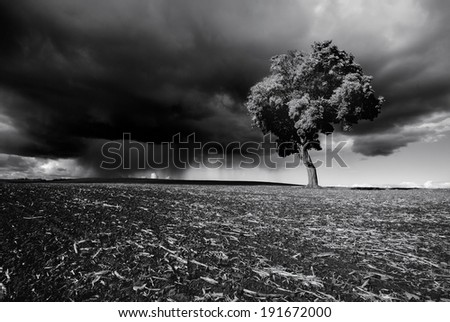 Tree on the field in spring before the rain ,black and white - stock photo