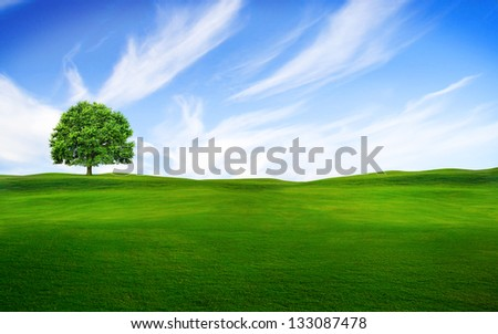 Tree on the green grass with blue sky on center horizon