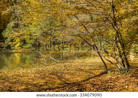 Tree on the lake shore, with water covered with fallen leaves, on a sunny autumn day - stock photo