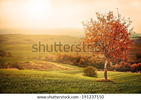 Tree on the meadow - stock photo