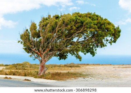 Tree on the top of the hill, near the sea, blown away by the wind - stock photo