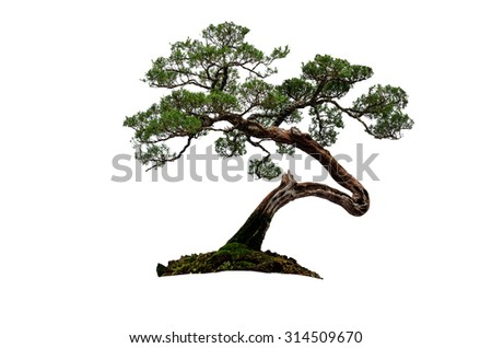 tree on white background - stock photo