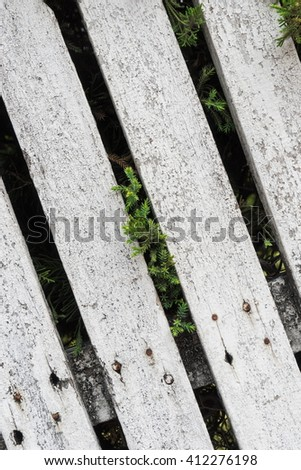 Tree on wood panels wall for background