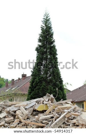 tree over destroyed building - stock photo