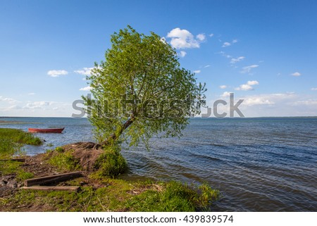 Tree over the water