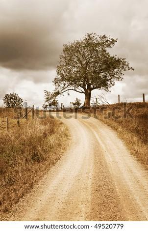 tree path - stock photo