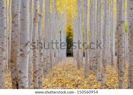 Tree patterns can be seen at this tree farm  - stock photo