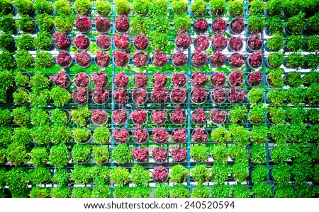 Tree planted heart shape in pots on walls. - stock photo