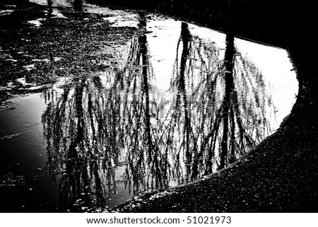 Tree reflected in the water. Monochrome black-and-white photo. - stock photo