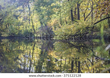 tree reflection in water ,autumn time