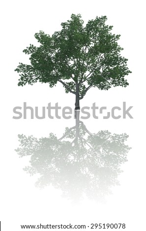 tree  reflection isolate