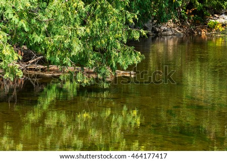 Tree reflection over a placid stream