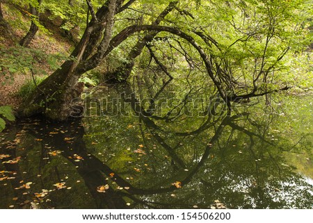 tree reflections in the lake - stock photo