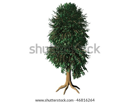 tree rendered isolated on white
