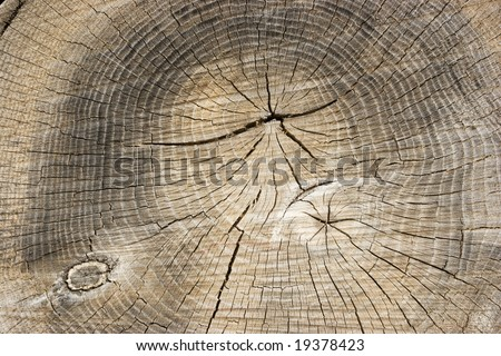 Tree Ring Background 4