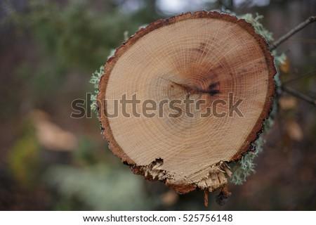tree-rings dating method