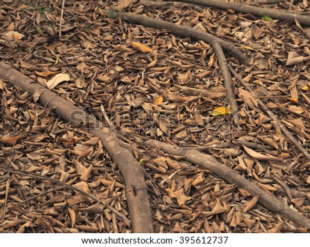 Tree root and dried leaf