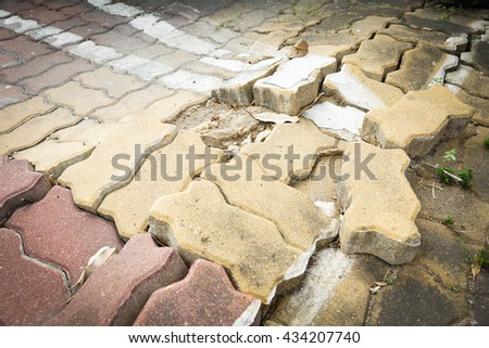 tree root growing in cement blocks - stock photo