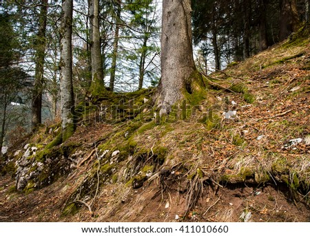 Tree root in the forest - stock photo