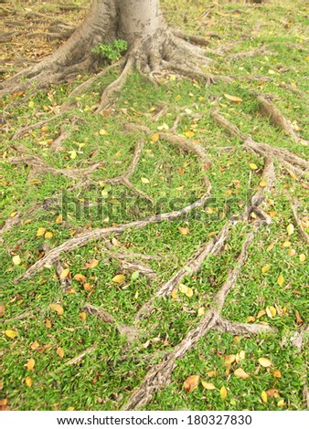 Tree root on the ground - stock photo
