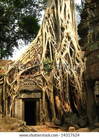 Tree root sit on a ruin ancient building at Angkor Wat, Cambodia - stock photo